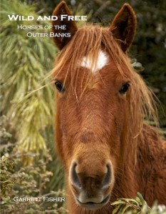 Book: Wild and Free-Horses of the Outer Banks