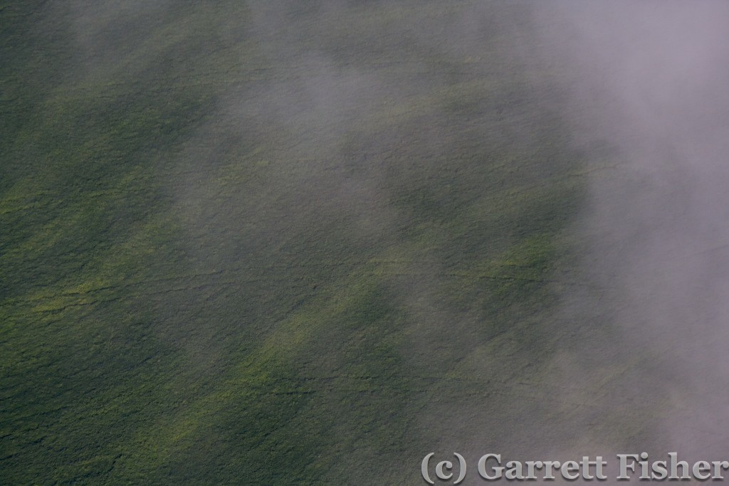 1-Field with Fog