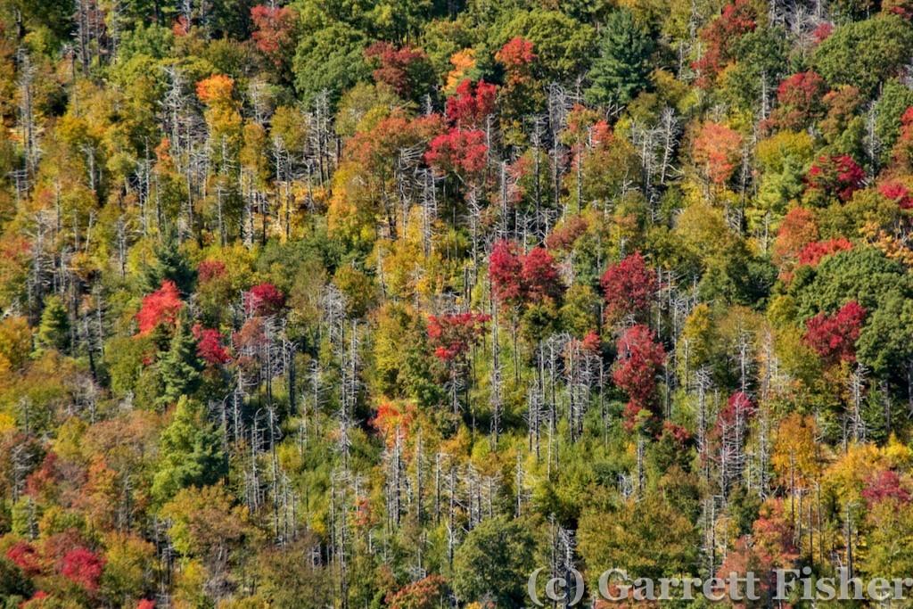 18-Leaves, SNP