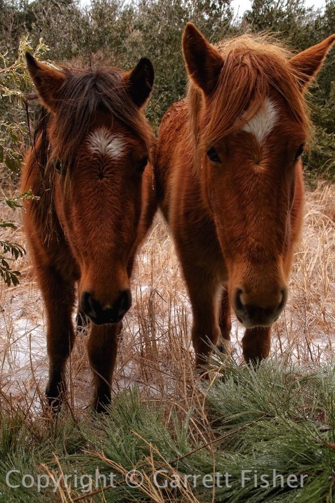 2-Horse