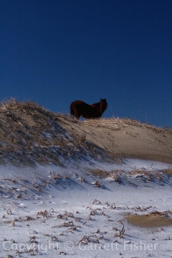3-Horse
