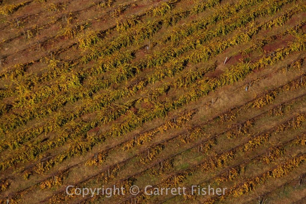 12-Vineyard
