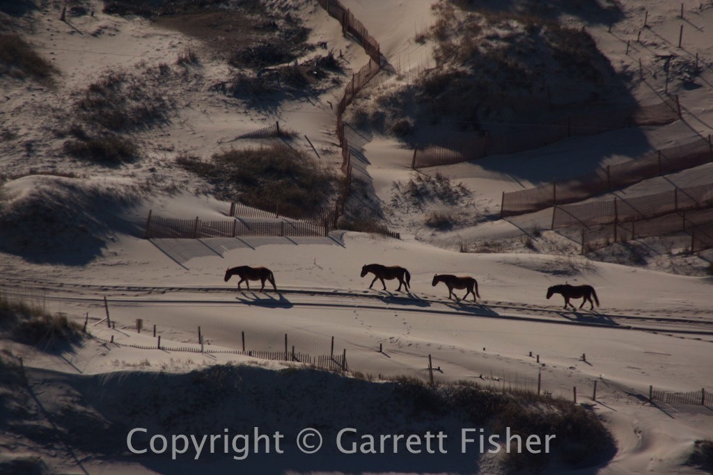 6-Horses